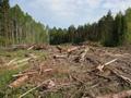 Земли Химкинского леса под застройку появились в свободной продаже