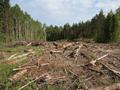 Без альтернатив: трасса Москва — Петербург пройдет через Химкинский лес
