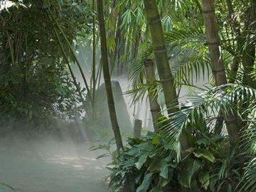 В Австралии умер русский Тарзан, 60 лет скитавшийся в джунглях