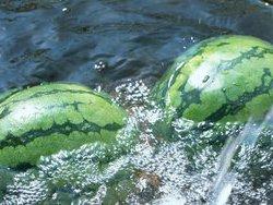 В Байкал высыпалось более 20 тонн арбузов
