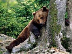 Оголодавшие камчатские медведи пришли к людям в поисках еды