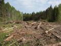Власти РФ приняли решение уничтожить Химкинский лес в пользу платной трассы